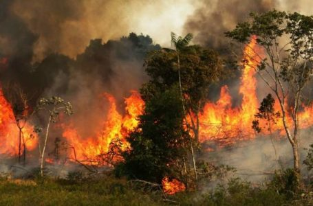 Amazon fires bring climate change